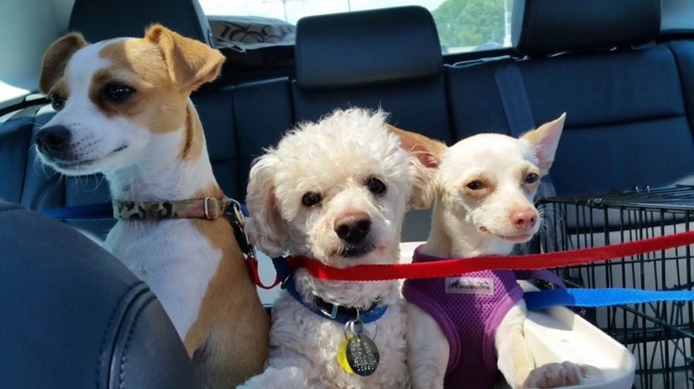 Why one woman decided to open up her home — and her car — to help homeless dogs.