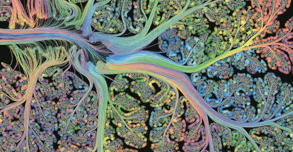 2 scientists turned a human organ into an art project. Here are 11 stunning images.