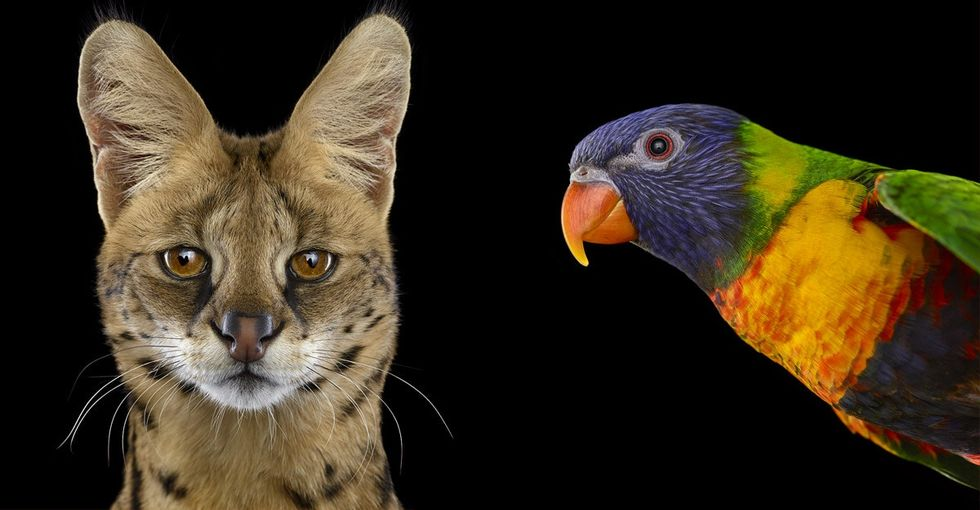 11 animal portraits that will inspire you to get back to nature.