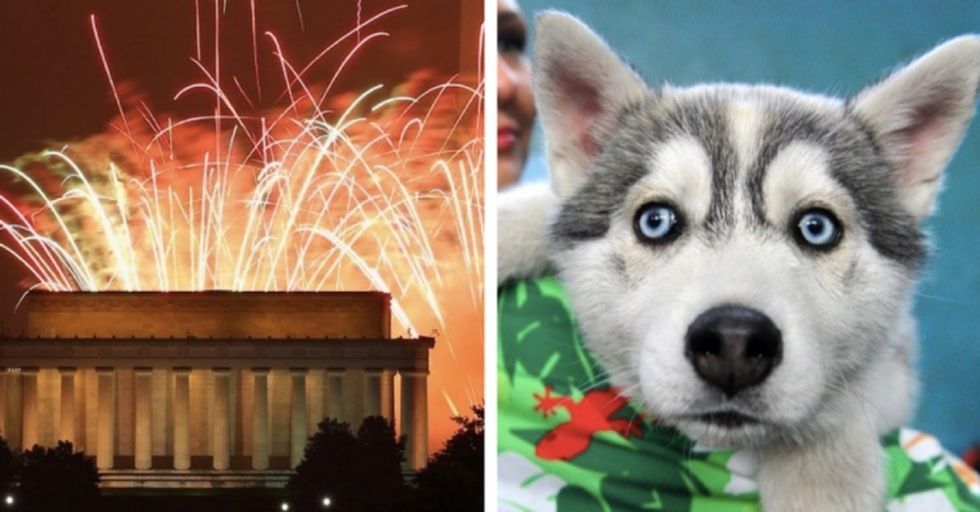 Dog parents: Here's how to calm down your dog during fireworks.