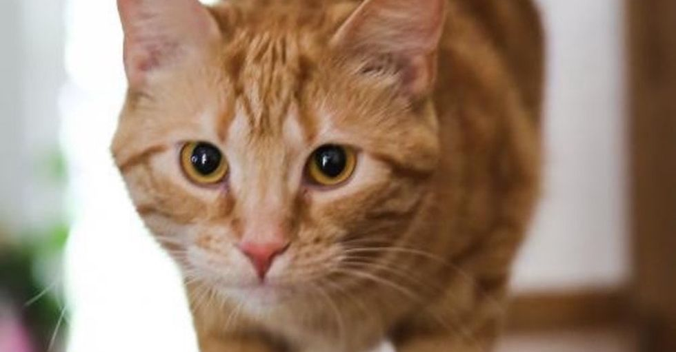 On a long shot, one community rallied to help save hundreds of homeless cats.