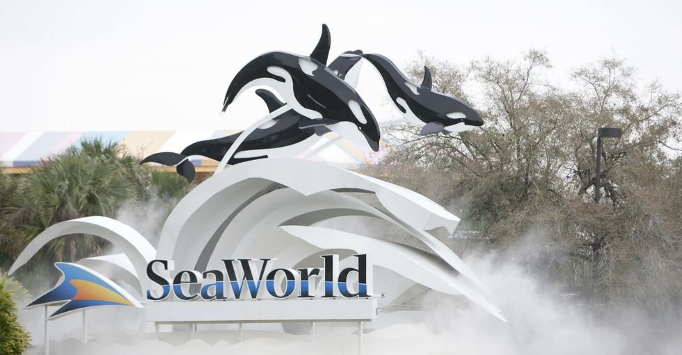 News out of SeaWorld shows just how big of an impact 'Blackfish' has had.