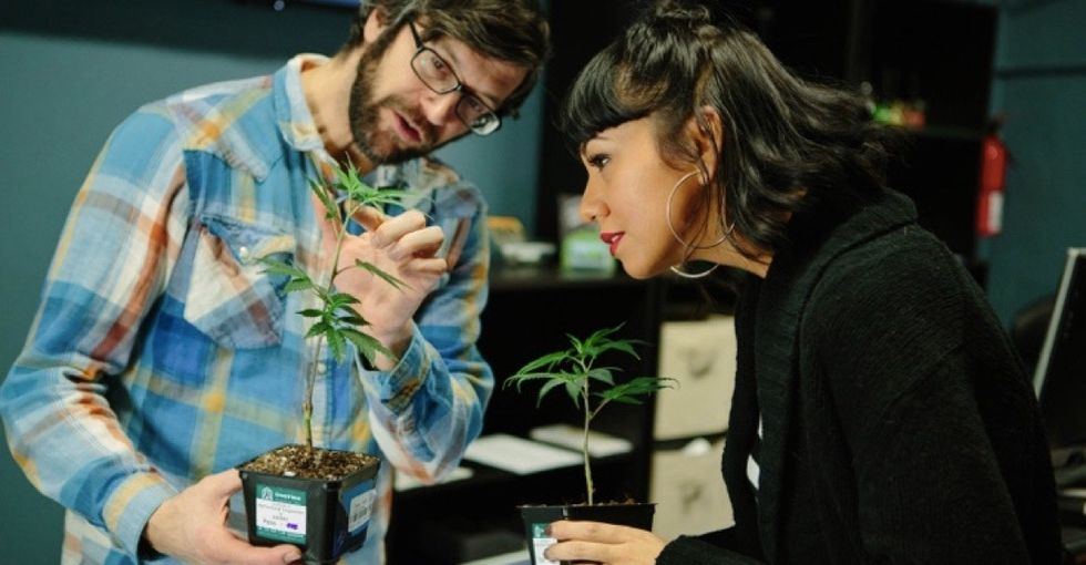 Why guidelines regulating legal cannabis businesses may be doing more harm than good.
