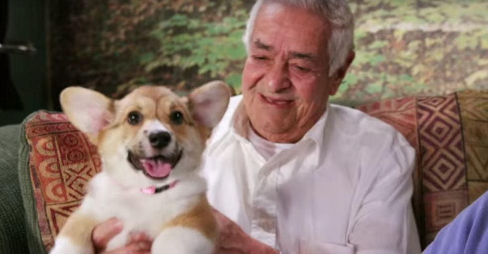 Puppies invaded a retirement home, preschool, and gym. Pure bliss ensued.