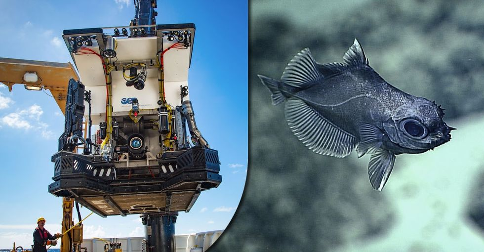 A rover dived to the bottom of the ocean — again. 15 photos show what it discovered.