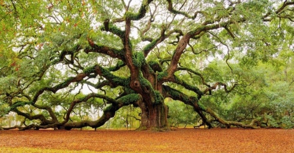 21 trees going out on a limb to ask for your help.