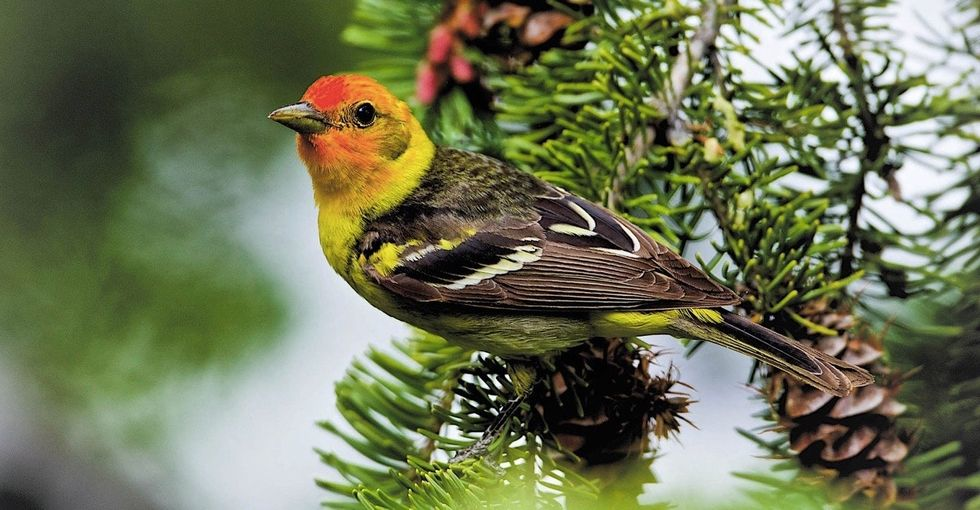 What to plant in your garden to attract the prettiest birds.