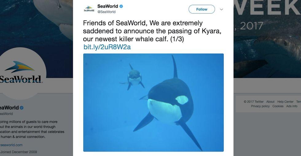 SeaWorld's cruel breeding program comes to a very bittersweet end.
