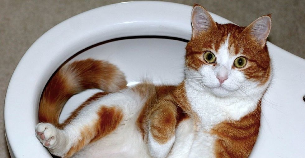 Are cats a liquid? Why do old men have big ears? The Ig Nobel Prizes have the answers.