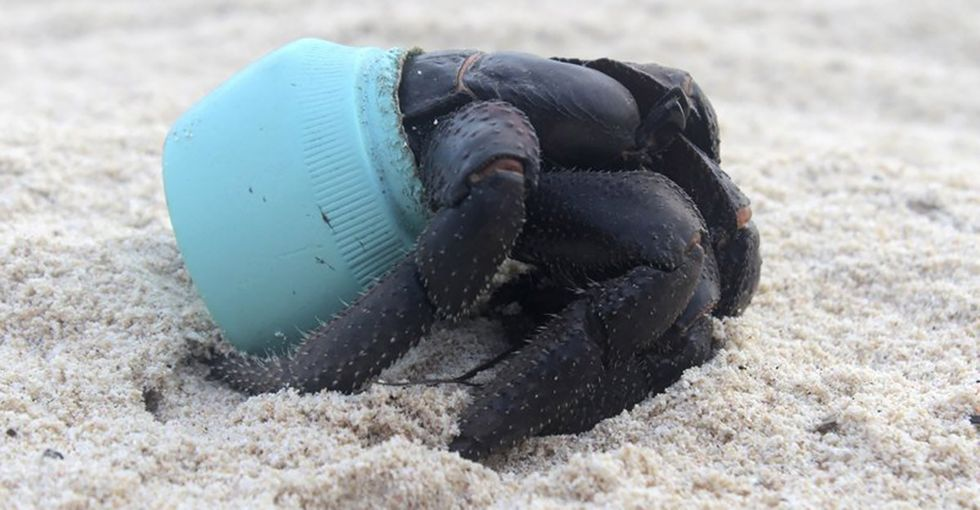 Want to see what 30 million pieces of plastic on a beach looks like? Visit this island.