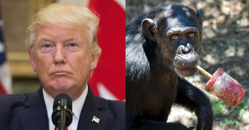 What chimps understand about keeping secrets that Donald Trump doesn't.