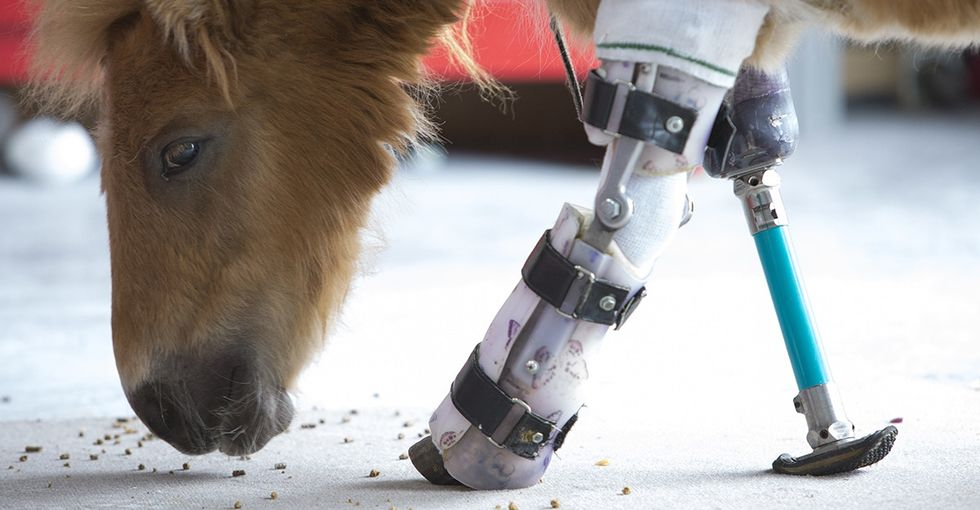 Disabled animals are getting a second chance thanks to an amazing prosthetic expert