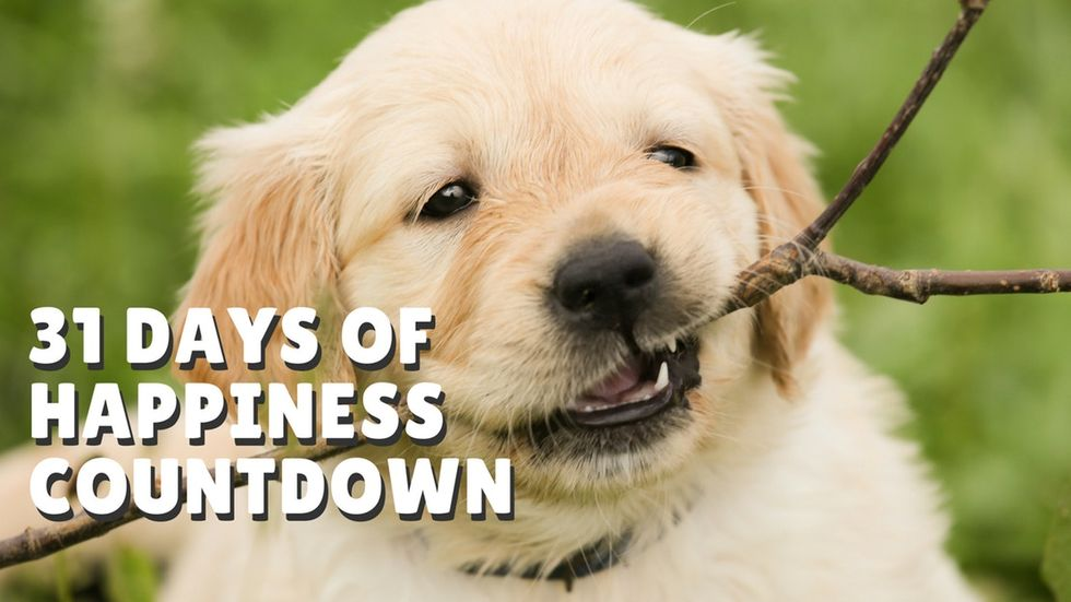 Count down to the new year with 31 Days of Happiness!