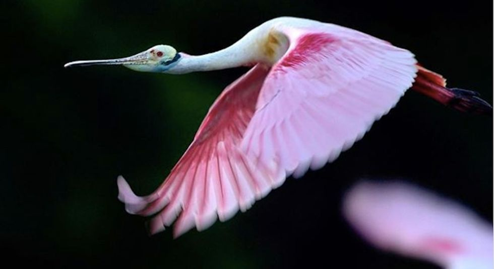 13 gorgeous photos of wild Florida that show why it's worth saving.