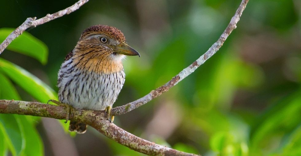 381 new species were discovered in the Amazon. That's 381 new reasons to protect it.