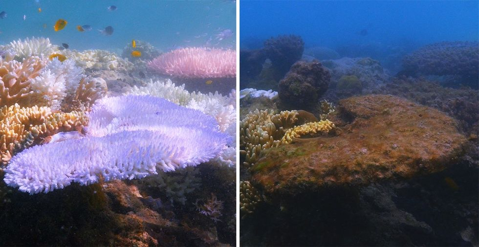 See stunning before and after shots of coral reefs as ocean temps rose by only 2 degrees.