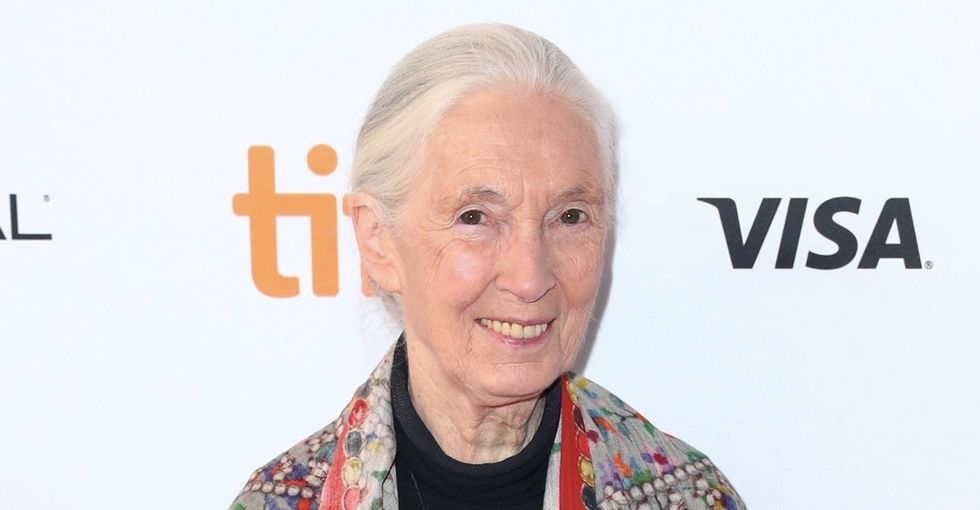 5 perfect things Jane Goodall told Reddit about hope, work, and Bigfoot.