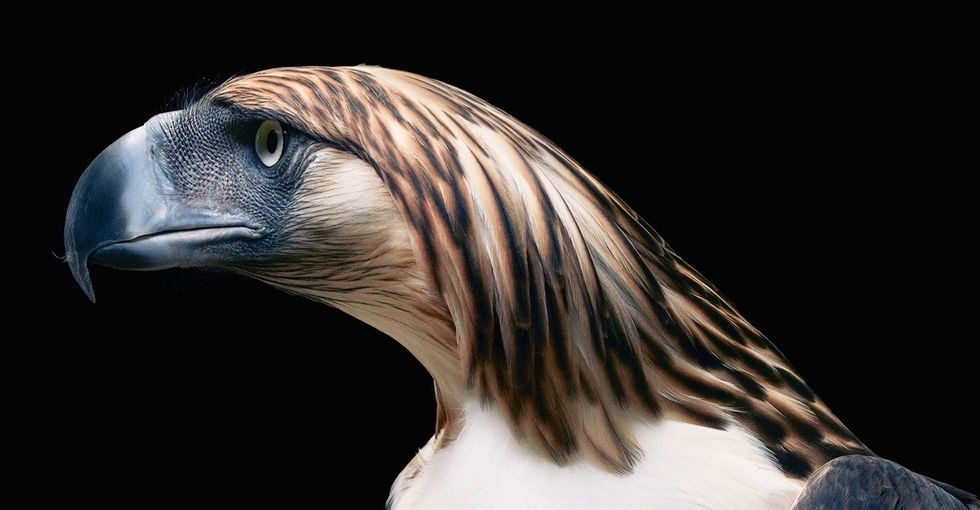 21 intimate portraits of rare, endangered, and disappearing animals.