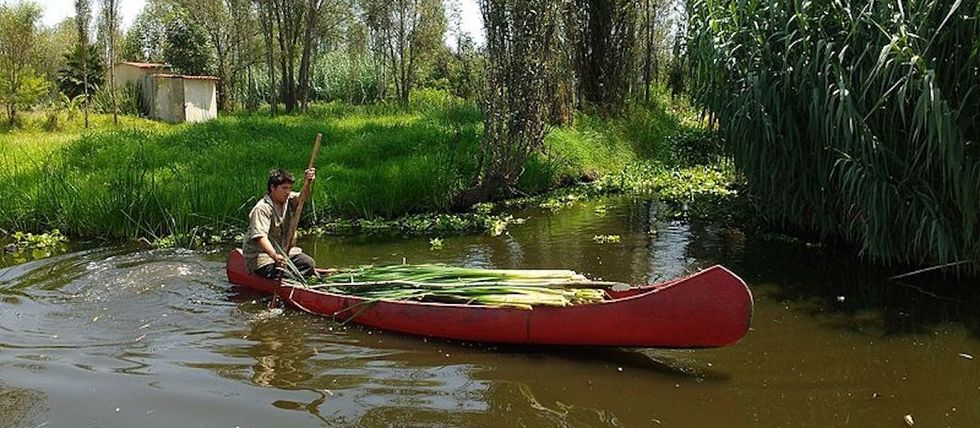 Chinampas: What they are, how they work, and why they matter today more than ever.