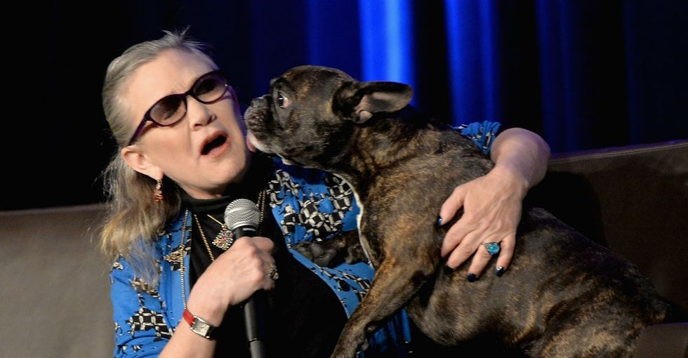 31 Days of Happiness Countdown: Carrie Fisher's dog is in the new 'Star Wars.' (Day 13)