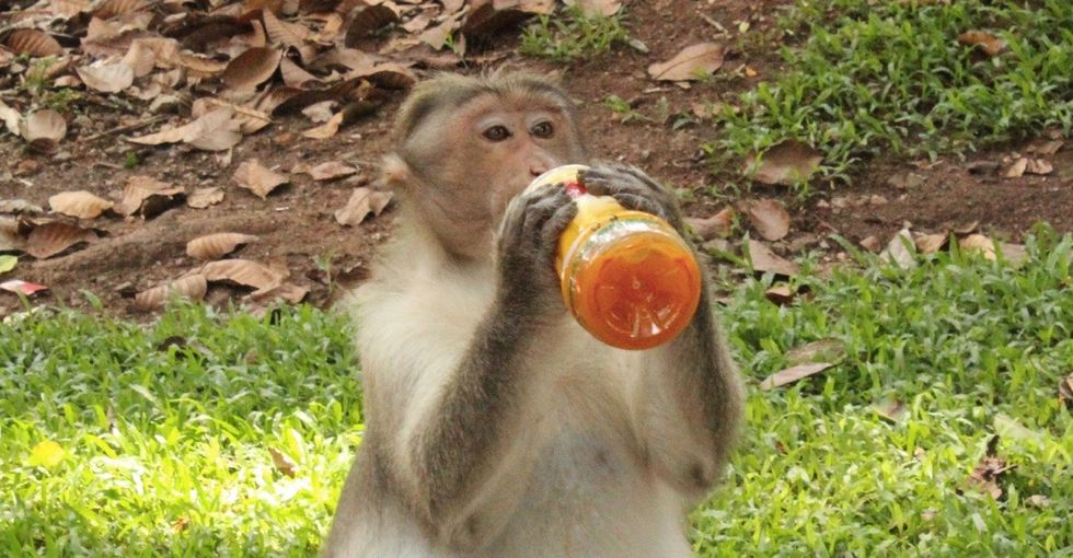 Human behavior turned these 6 animals into garbage lovers. Here's how.