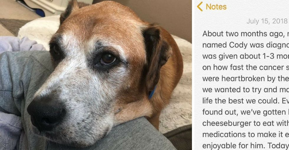 A terminally ill dog's love of cheeseburgers is the uplifting story we all need right now.
