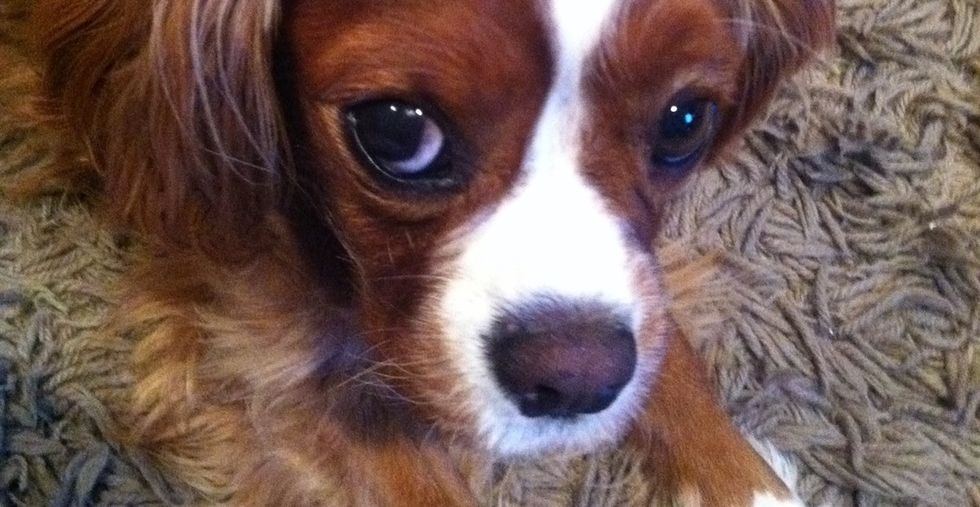 Ever felt guilty for grieving more over a dog than a relative? This story is for you.