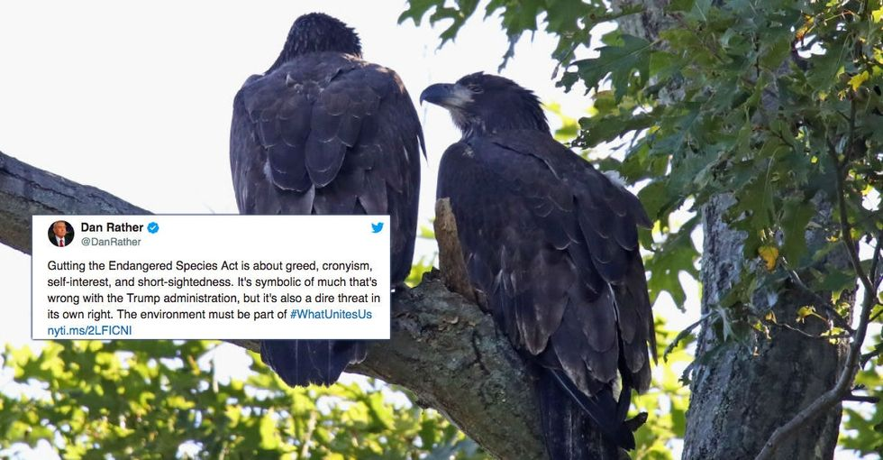 The Trump Administration just tore a hole through the Endangered Species Act