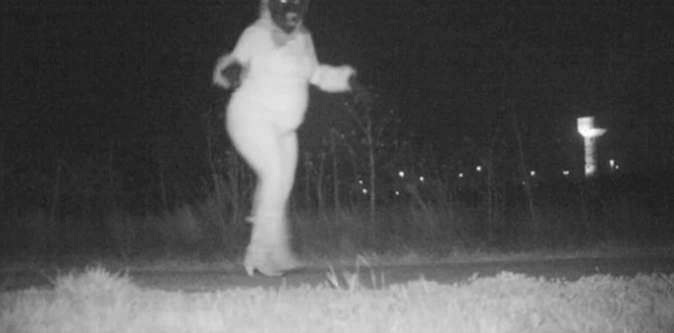 Police set up a secret camera to catch a mountain lion. That's when everything went bonkers.