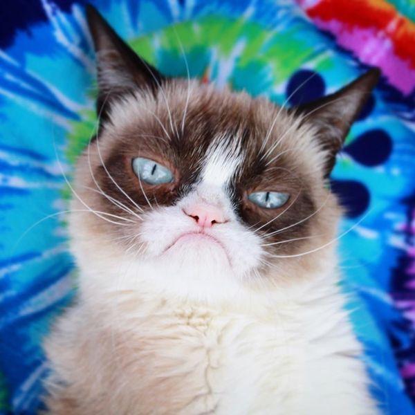 Grumpy Cat Is Dead