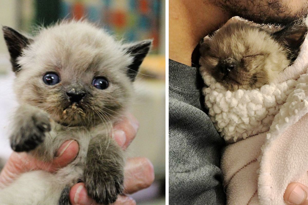 Kitten Born Special is So Happy When He Finds Someone Who Won't Give Up on Him