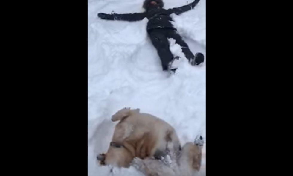 cane angelo neve