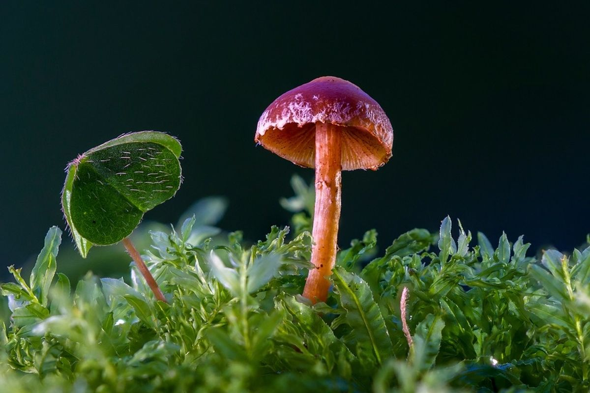Scientists discovered a mushroom that eats plastic, and believe it could clean our landfills.