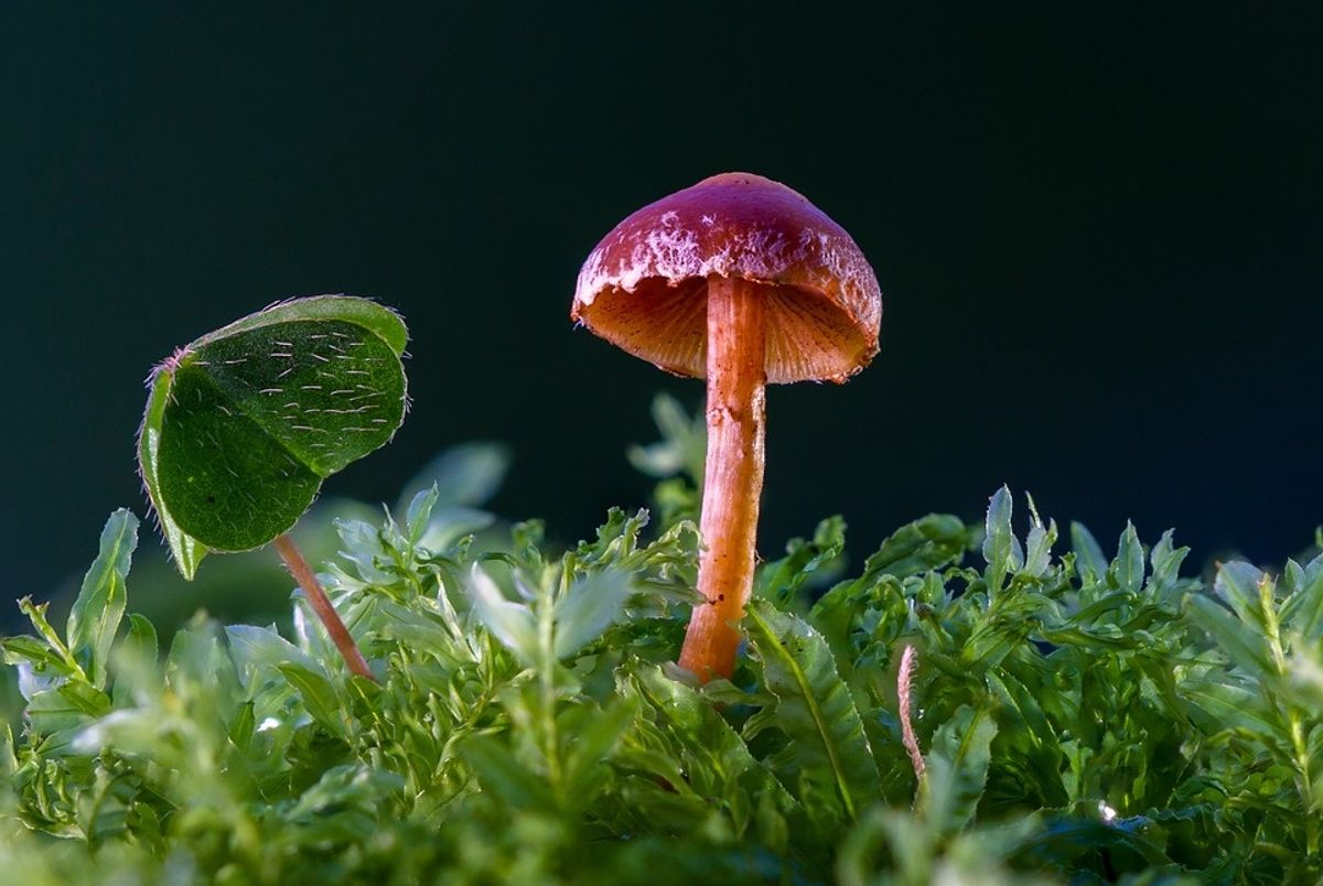 Scientists Discovered A Mushroom That Eats Plastic  And