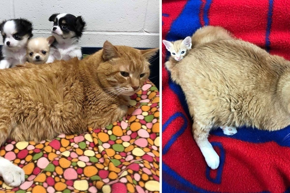 Stray Cat Becomes Vet Nurse and Has Been Helping Animals in Need Every Day for 2 Years