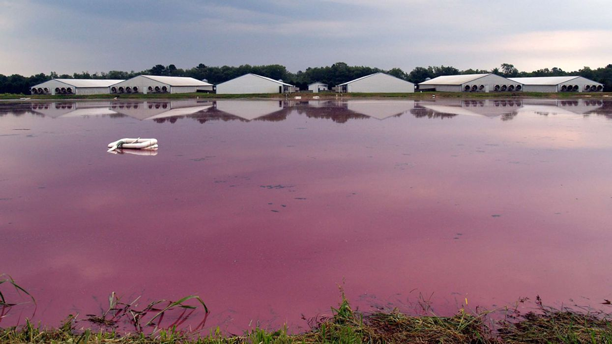 The Scary New Math of Factory Farm Waste