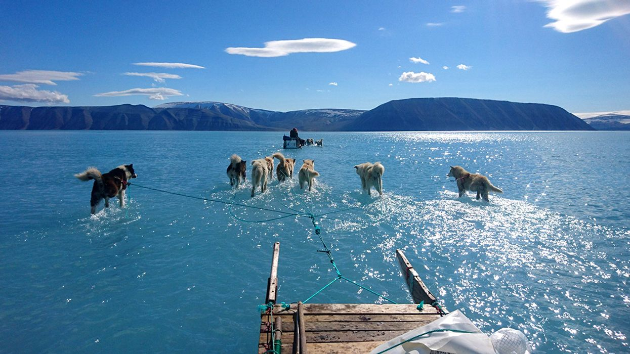 'This Should Scare the Hell Out of You': Photo of Greenland Sled Dog Teams Walking on Melted Water Goes Viral