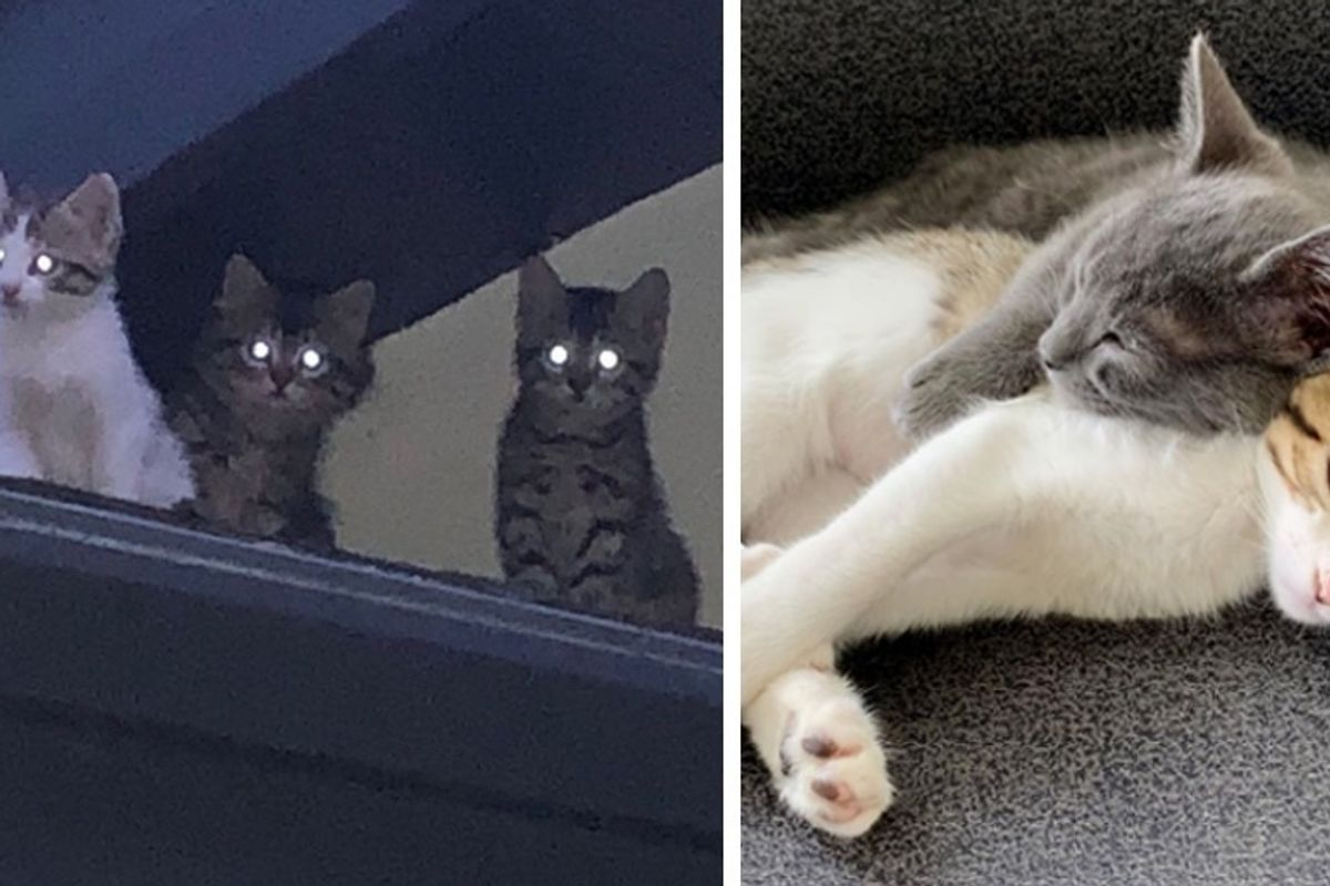 Kittens from Rooftop Walk into Rescue Together and Won't Leave Each Other's Side