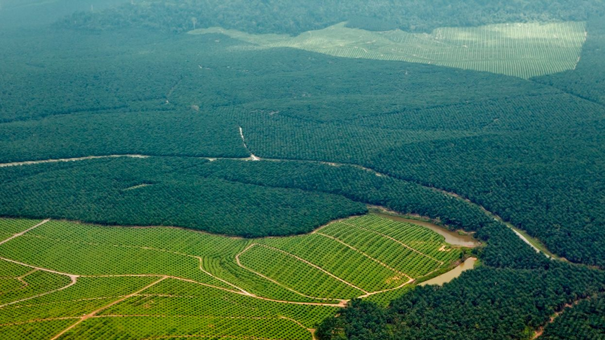 Palm Oil Importers Won't Meet Zero Deforestation Goals by 2020, New Report Finds
