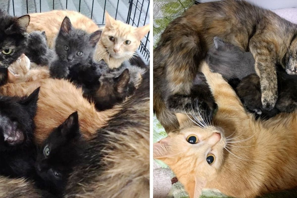 13 Cats and Kittens Rescued from Crate - They Look After Each Other as a Big Family