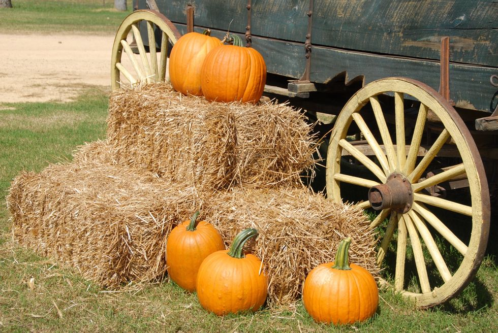 5 Reasons Why Visiting A Pumpkin Patch Is Better Than Just Buying A Pumpkin