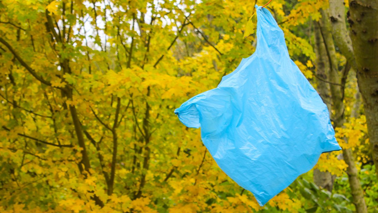 Maine and Vermont Pass Plastic Bag Bans on the Same Day