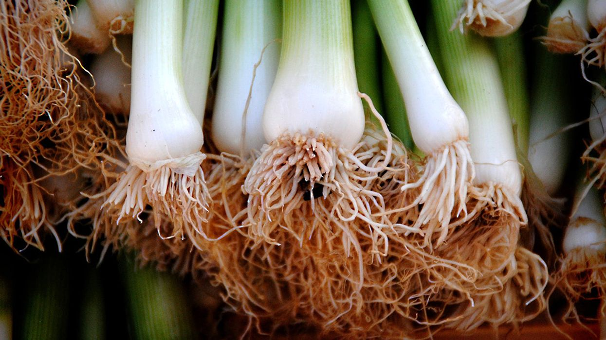 10 Health and Nutrition Benefits of Leeks and Wild Ramps