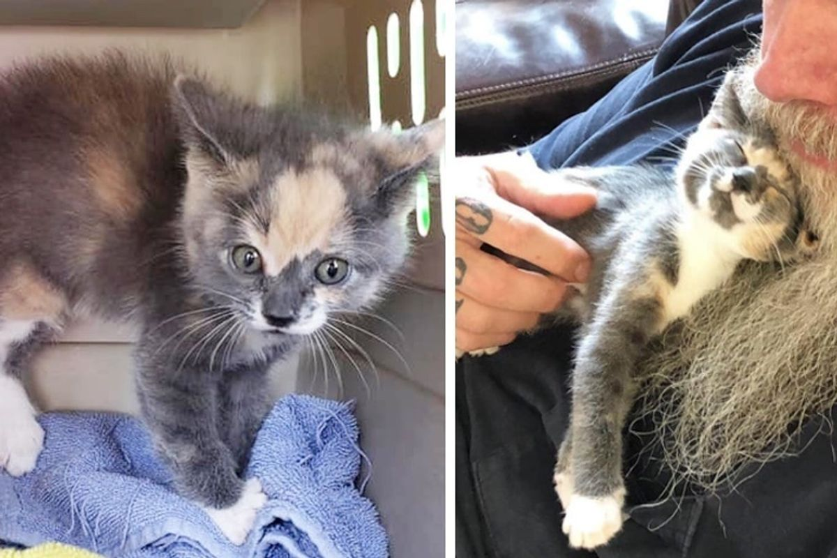 Sassy Rescued Kitten Turns into Cuddle-bug When She's No Longer Alone