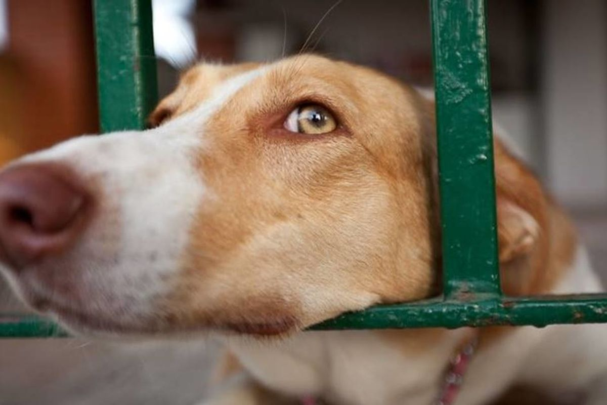 Lawmakers have introduced a bill that makes animal cruelty a nationwide felony.