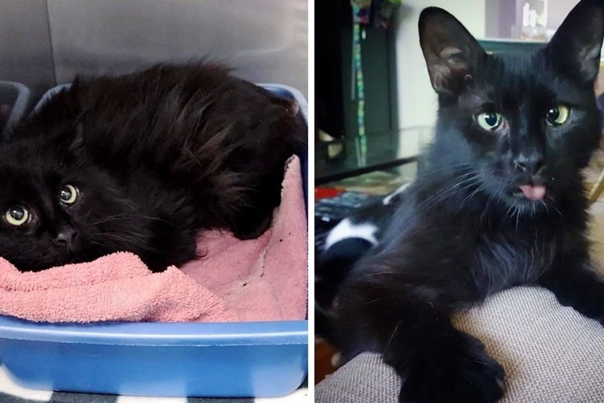Rescued Kitten Who Can't See Very Well, Blossoms When He Finds Someone to Love
