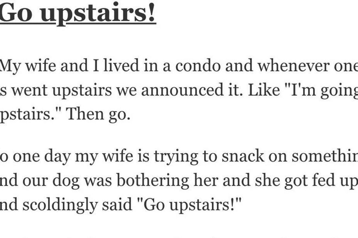 13 pet owners share the funniest thing they've accidentally taught their pets to do.