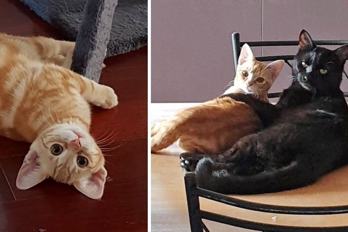 Rescued Cat Who Wants a Family, Adopts Kitten Who Needed a Friend