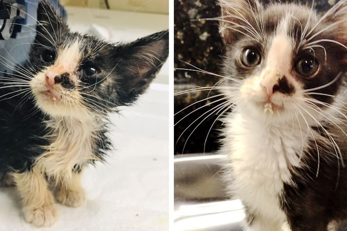 Stray Kitten Wanders to Neighbor's Home By Himself, Meowing for Help