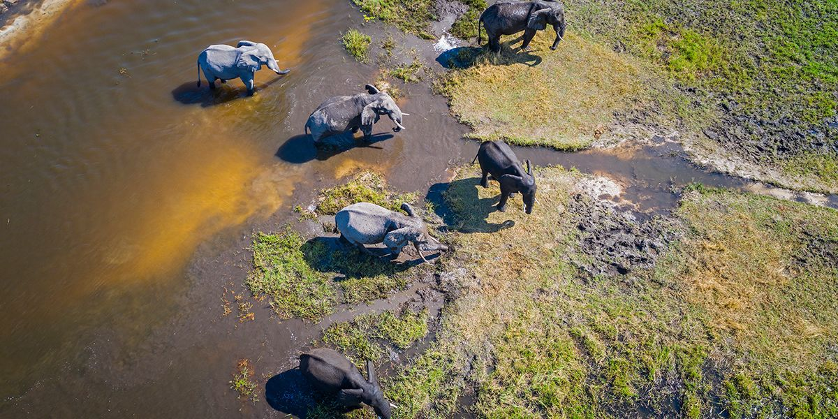 Elephant Poaching Is on the Rise in Botswana,...